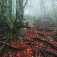 Артерии леса...