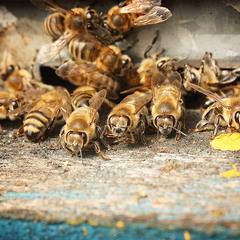 Пчёла,Космос,Фил и Саша Белый
