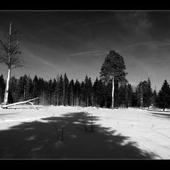 Длинные тени