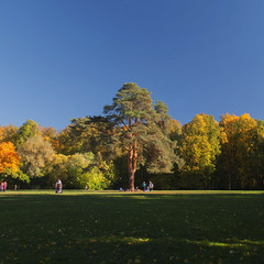 Осеньняя лужайка