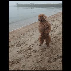 На пляже опустевшем.