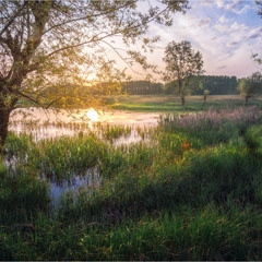 Майский вечер на болоте