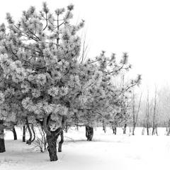 Снежные иглы