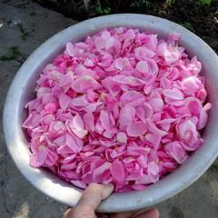 Чайная роза для варенья.