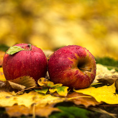 Осенние красные яблочки