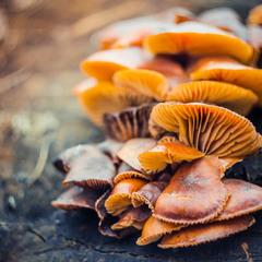 Зимние грибочки