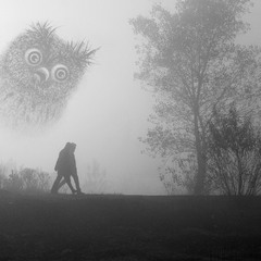 В поисках ёжика в тумане