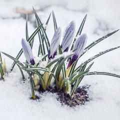 Весна пришла в календаре, а за окном зима шумела...