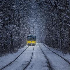 Лес, трамвай и стук колёс
