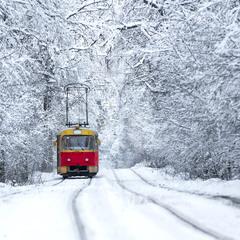 Сквозь зимний лес на новогодниый праздник