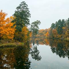 Осенняя Пуща