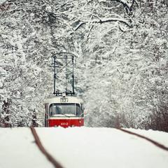 Партизан (зимний)