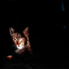 Кошка в черной комнате