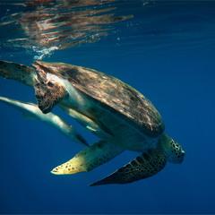 Синхронное плаванье :)