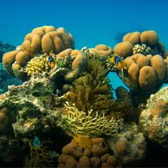 Подводная симметрия :)