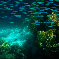 Зимние краски Красного моря