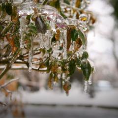 Хрусталь зимы