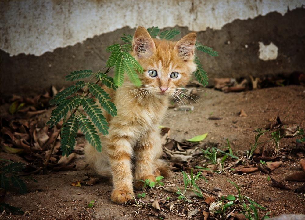 того, картинки котенок худой обладает компактным кустом