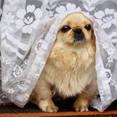 Невеста Бася