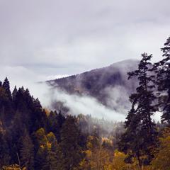 Сиреневый туман. Грузия. Район Сиони.