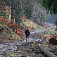 Прогулка через лес