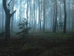 Ранковим лісом