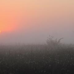 Ранок на Десні