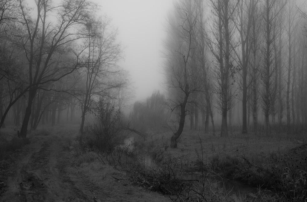 картинки призрачного леса