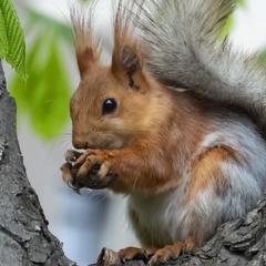 ...и орешки все грызет...