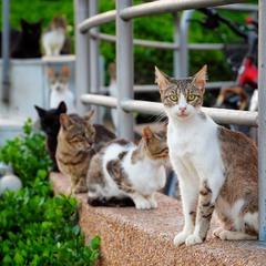 Сколько кошек на фото? :)