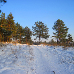 Костры на снегу от вечерней зари.
