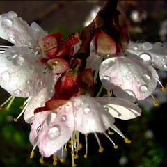 дождевая капель