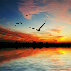 My Fiary Sunset