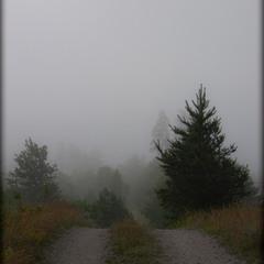 утопая в тумане