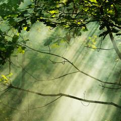 the white rays of healing light