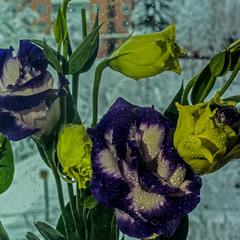 ...ці дивні квіти дивної зими....