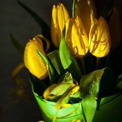 Сонячні тюльпани