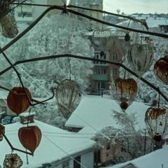 Фізаліс і Зима