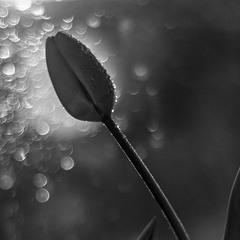 Чорно-біла весна