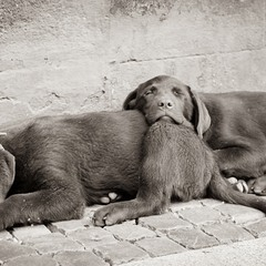Собачья любовь...