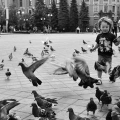 Летите голуби, летите...