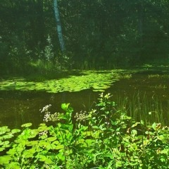 Лесное озеро.2