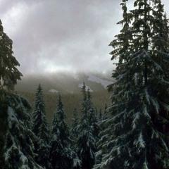 Перший сніг.