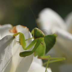 Зеленый пришелец