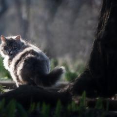 Весенний котик! :-)