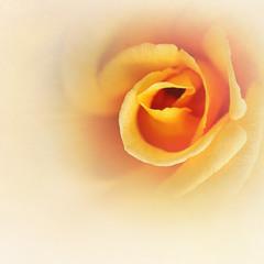 Немного цветочной эротики