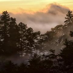 Прогулялось облако по лесу...