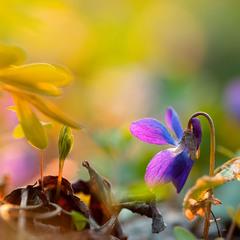 В леске весна..)
