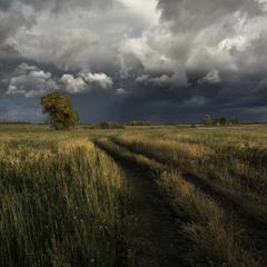 Незатейливый пейзаж