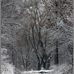 Гравюра Зимы...